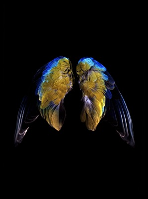 CJ Taylor, (blue, blue, green-yellow), Cibachrome R-Type hand-crafted print, 100 x 120cm, Image © The Artist
