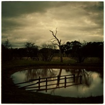 Jane Burton, The Other Side 1  2002/03, Type C photograph, 110h x 110w cm
