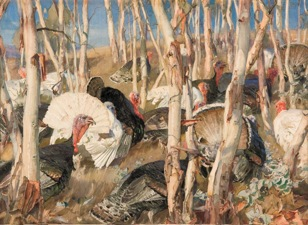 Hans Heysen, Bronzewings and saplings, watercolour on paper. Image © Art Gallery of South Australia