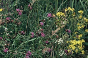 George Popperwell 'Wildflowers' (detail, from a set of 12 photographs) 2008, image courtesy CACSA, Image © The Artist