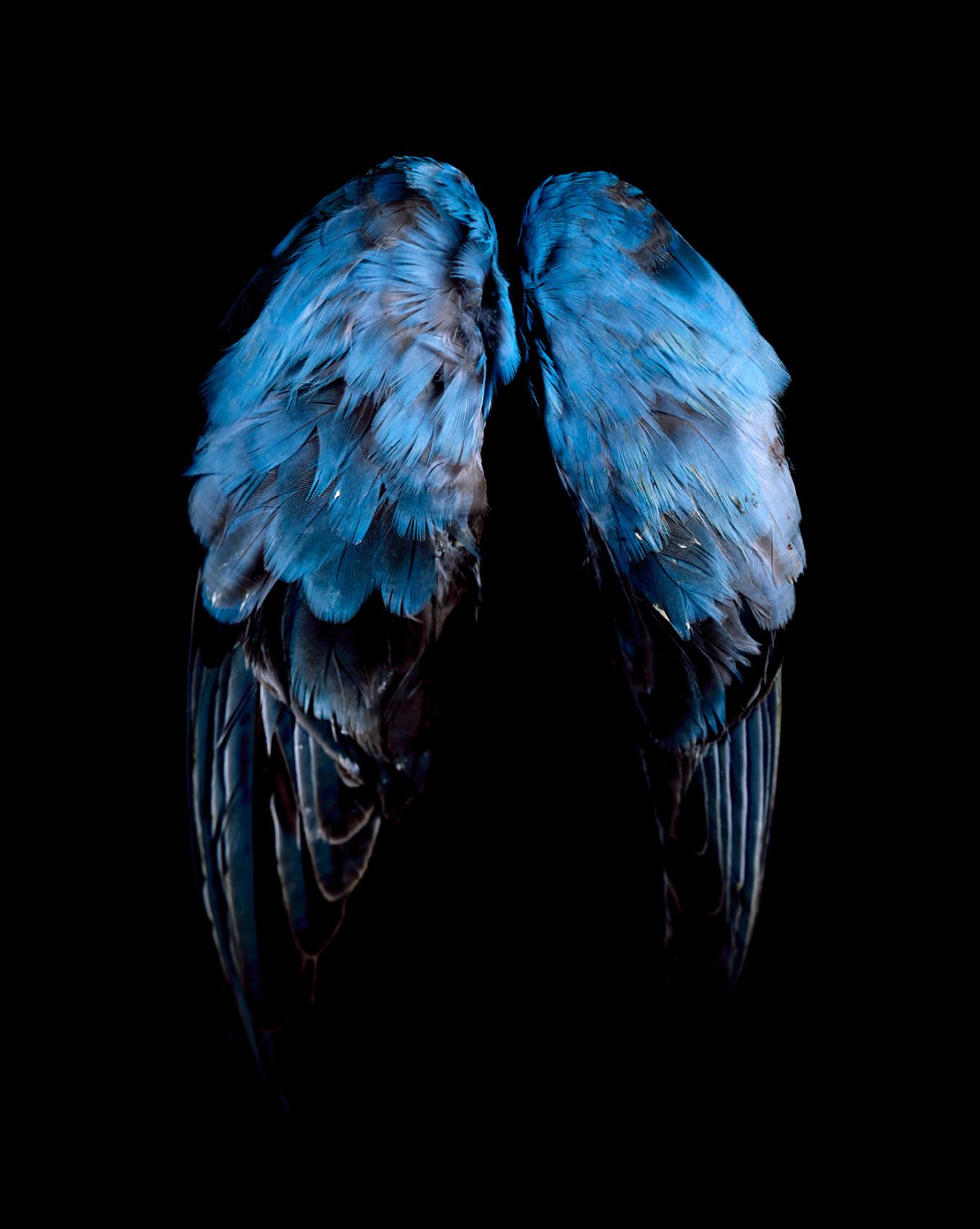 (blue, blue, grey)